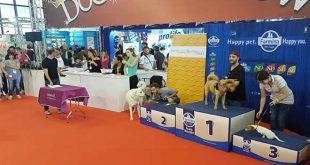 Il DogShow a Quattrozampeinfiera 2018