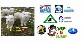 Iniziative di protesta contro la mattanza degli agnelli