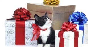 No agli Animali in regalo