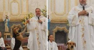 Juan Pablo, il sacerdote che salva i randagi. Foto dal Web