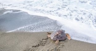 La tartaruga Tortano. Foto dal Web
