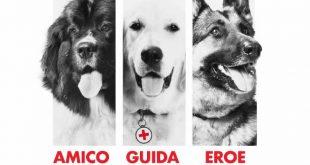 Un lavoro da cani ad Euroma2