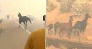 Cavallo nel fuoco per salvare la famiglia