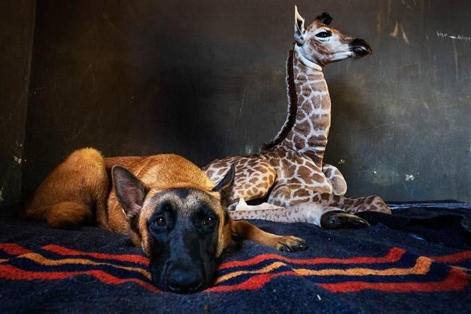 Jazz e Hunter. Foto dal Web