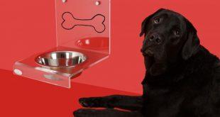 Ciotola per cani. Foto dal web