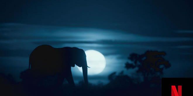 Notte sul pianeta terra, per Netflix la voce di Alessandra Mastronardi