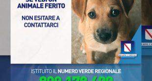 Numero verde per il pronto intervento veterinario - Regione Campania