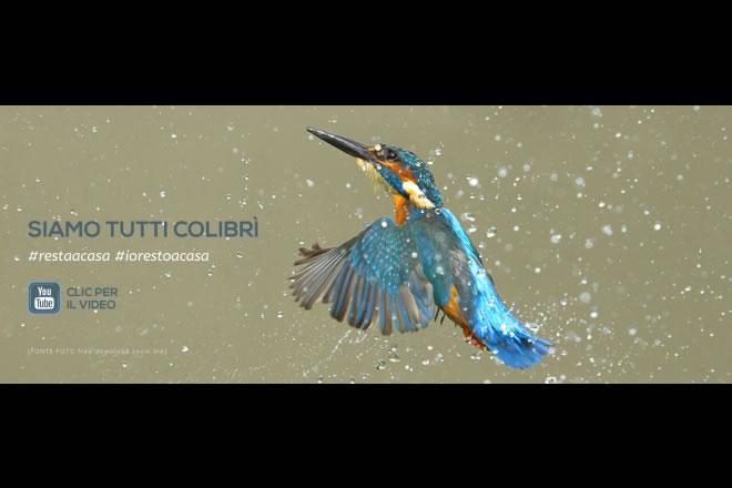 Simone Cristicchi - Siamo tutti colibri