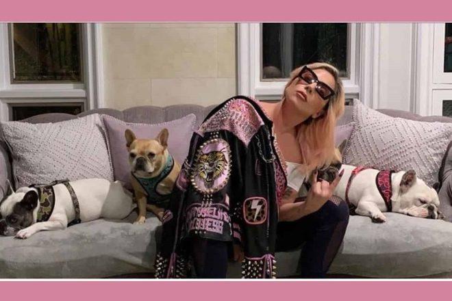 I Buldog di Lady Gaga. Foto da Instagram