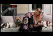 Cinque arresti per il rapimento dei cani di Lady Gaga