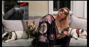 Lady Gaga con i suoi cani. Foto dal Web